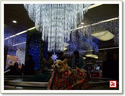 ライオン広場のイルミネーション.jpg